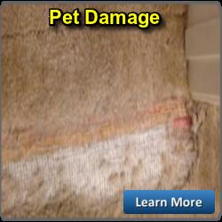 PET DAMAGE